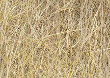 Straw. After harvest in Thailand Stock Photo