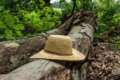 Straw Hat auf gefallenem Baum Lizenzfreie Stockbilder