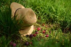 Straw Hat And Fallen Fruits graden dedans Image stock