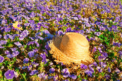 Straw hat on a field of purple pansies with a butterfly. Evening sun Royalty Free Stock Images