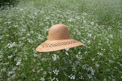 Straw hat on the flower field Royalty Free Stock Photos