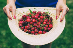 Straw hat full of freshly picked sweet cherries Stock Image