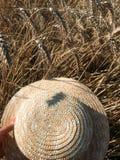 Straw Hat i ett vetefält i solen fotografering för bildbyråer
