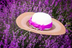Straw hat in lavender field in the summer royalty free stock photo
