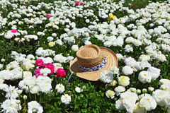 The straw hat left in a field Stock Photo