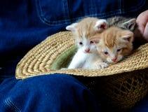 Straw Hat och par av av kattungar Fotografering för Bildbyråer