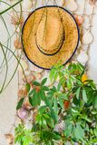 Straw hat and seashells hanging on wall stock photo