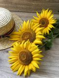 Straw Hat solrosor på tabellen royaltyfria bilder