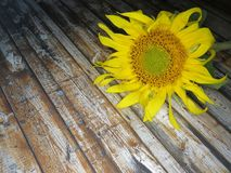 Straw Hat sunflowers on the table royalty free stock image