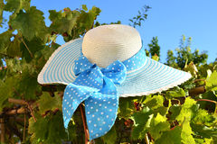 Straw Hat in a Vine Field. Blue and white straw hat resting in a vine Stock Photo