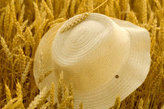Straw Hat in wheat field Stock Images