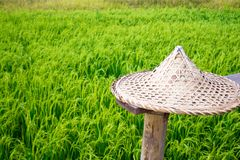 Straw hat in wheat field green fresh environment nature and holiday concept idea travel Asia background stock photography