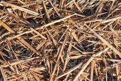 Straw hay background Stock Images
