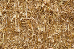 Straw hay background texture. Close-up stock image