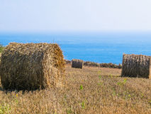 Straw hay bale on the field after harvest Royalty Free Stock Photography