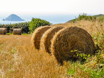 Straw hay bale on the field after harvest Royalty Free Stock Photos