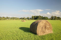Straw hay bales. Haystacks on a green meadow in solar summer day Stock Photography