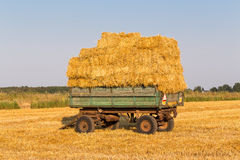 Straw hay bales on a trailer Stock Images