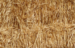 Straw or hay close up background Royalty Free Stock Photo
