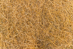 Straw hay. Pattern of straw hay on the ground ready for new season Royalty Free Stock Image