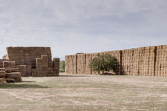 Straw or hay stacked in a field after harvesting Royalty Free Stock Image