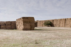 Straw or hay stacked in a field after harvesting Royalty Free Stock Images