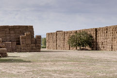 Straw or hay stacked in a field after harvesting Royalty Free Stock Photo