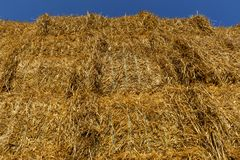 Straw or hay stacked in a field after harvesting. Below view Royalty Free Stock Image