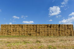Straw or hay stacked in a field after harvesting. Straw bale wall. Stock Photo