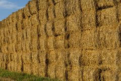 Straw or hay stacked in a field after harvesting. Straw bale wall. Royalty Free Stock Image