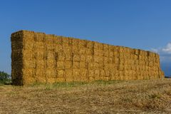 Straw or hay stacked in a field after harvesting in the sunset light. Royalty Free Stock Photo