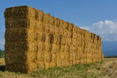 Straw or hay stacked in a field after harvesting in the sunset light. Stock Photo