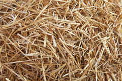 Straw hay texture Stock Images