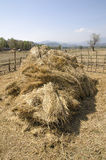The straw haystack on the field after harvesting. Royalty Free Stock Photo