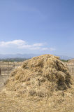 The straw haystack on the field after harvesting. Stock Photos