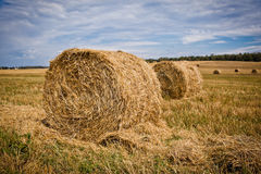 Straw Haystacks. On the grain field after harvesting stock photo