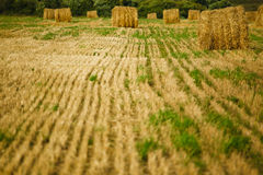 Straw Haystacks on the  field Stock Photos