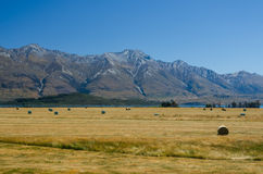 Straw haystacks on the field after harvest Royalty Free Stock Photography