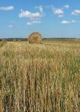 Straw Haystacks on the field Royalty Free Stock Photo