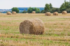 Straw Haystacks on the grain field Stock Photo