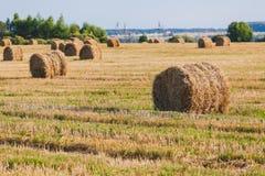 Straw Haystacks no campo de grão fotografia de stock royalty free