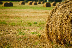 Straw Haystacks On The Field Royalty Free Stock Images