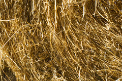 Straw for horses Royalty Free Stock Image