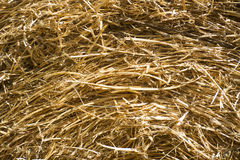 Straw for horses Stock Image