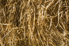 Straw for horses Royalty Free Stock Photography