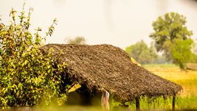 Straw hut in a field Stock Image