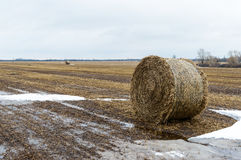 The straw left on the field after the grain harvest, the formation of the dense rolls for use as a fuel, the production of pellets Royalty Free Stock Photography