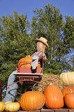 Straw man in buggy with pumpkins Stock Images