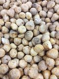Straw mushroom Stock Image