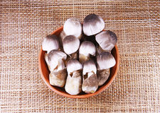 Straw mushroom in clay bowl Stock Image